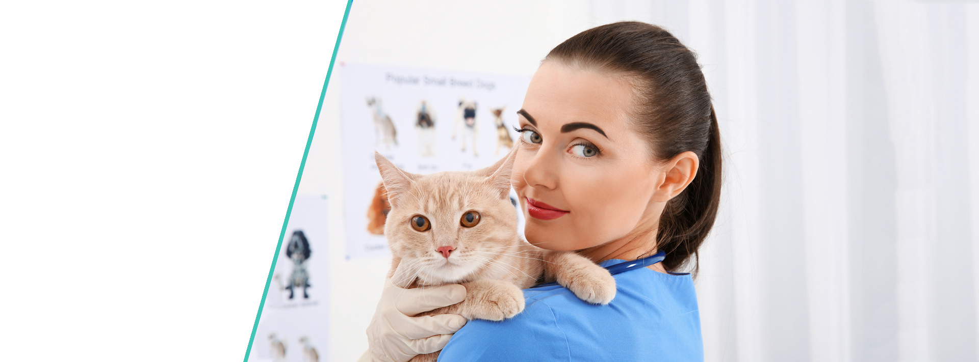Vet Jobs New Zealand